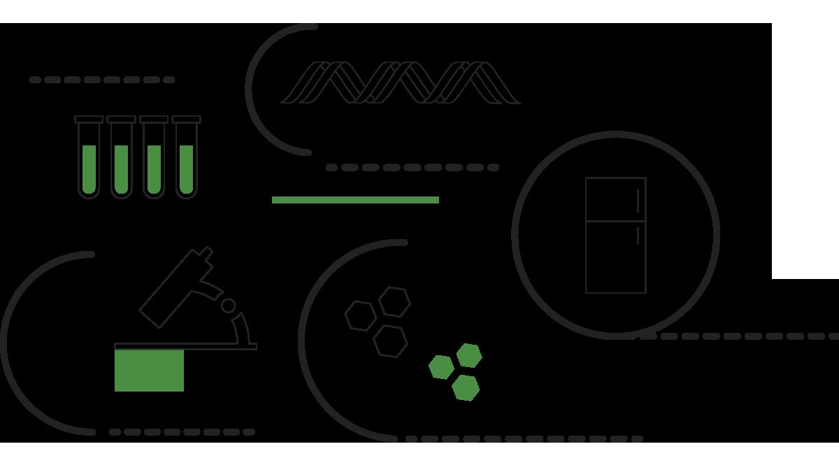 formula-meristec-cultivo-in-vitro-2