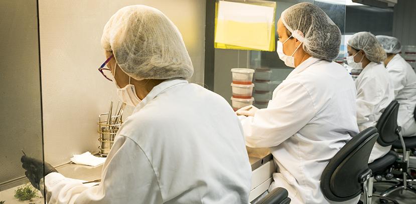 Trabajadoras micropropagacion vegetal cultivo in vitro
