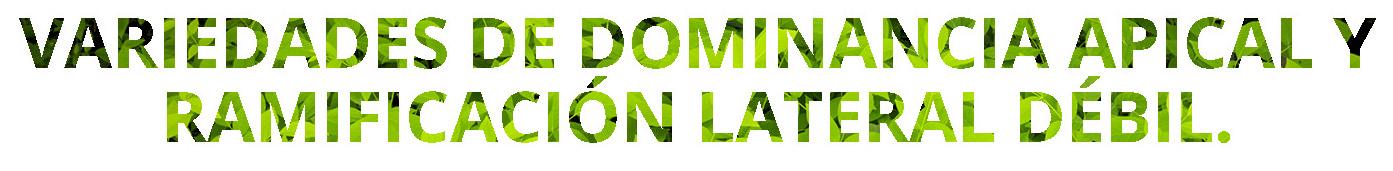 texto-variedades-de-dominancia-apical-y-ramificacin-lateral-dbil