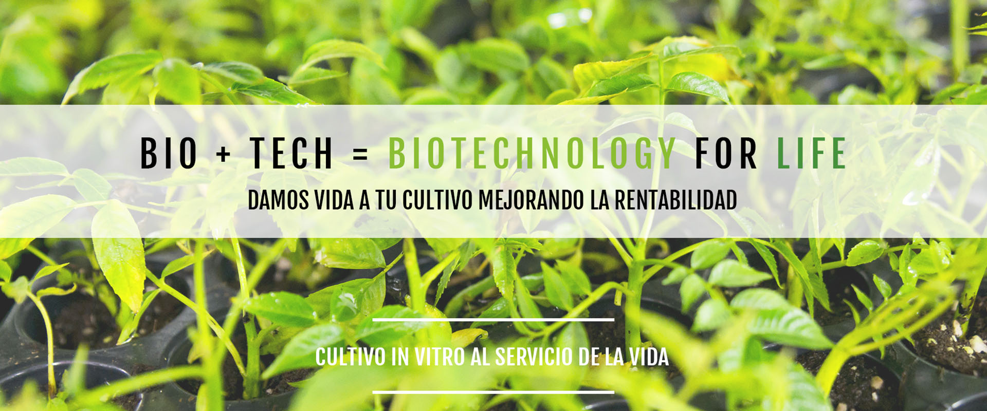 meristec-cultivo-in-vitro-nuestra-formula
