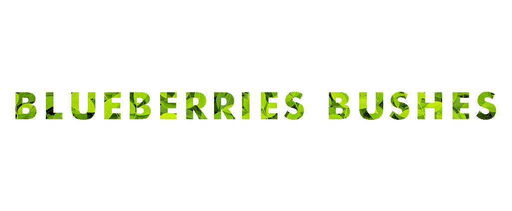 blueberries-ingles