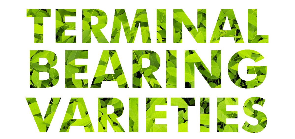 terminal-bearing-varieties